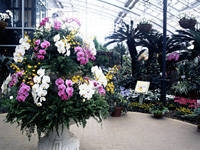 山中湖 花の都公園フローラルドーム「ふらら」・写真