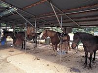 紅葉台木曽馬牧場・写真