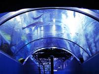森の中の水族館。山梨県立富士湧水の里水族館・写真