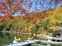 四尾連湖の紅葉・写真