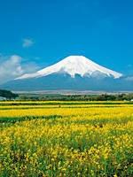 山中湖 花の都公園・写真