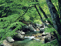 本谷川渓谷・写真