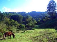 ふじさん牧場・写真