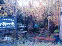 白駒池キャンプ指定地