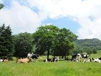 山田牧場・写真