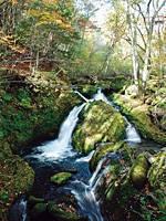 八千穂高原自然園・写真