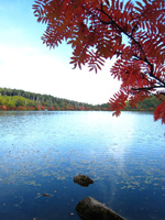 白駒の池・写真