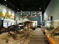 信州新町化石博物館・写真