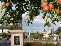 りんご並木・写真