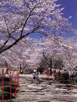 早掛沼公園・写真