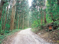 塩の道・佐野坂コース・写真