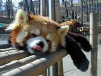 長野市茶臼山動物園・写真