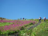 白馬五竜高山植物園・アルプス平自然遊歩道・写真