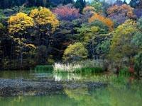 癒しの森・写真