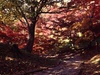 弘前公園・写真