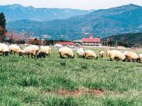 中津川市ふれあい牧場