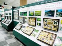 名和昆虫博物館・写真