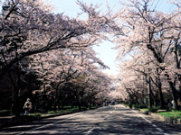 寺尾ヶ原千本桜公園