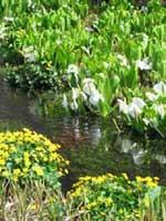 池ヶ原湿原
