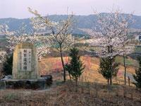桜百選の園・写真