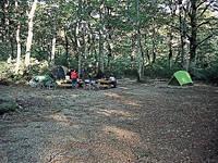 白山ブナの森キャンプ場