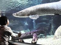 世界淡水魚園水族館 アクア・トトぎふ・写真