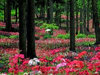四十八滝山野草花園 花の森