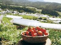 杤本農園・写真