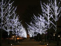 学びの森プロムナード(冬ソナストリート)