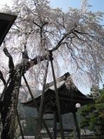 浄福寺・写真