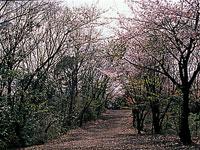 源氏山公園・写真