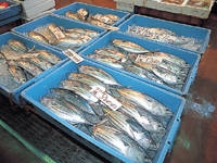 御前崎海鮮なぶら市場・写真