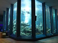 東海大学海洋科学博物館・写真