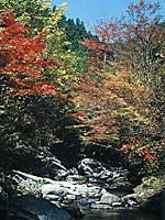 白倉峡の紅葉・写真