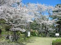 鳥羽山公園・写真