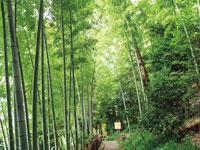 竹採公園・写真