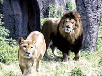 浜松市動物園・写真