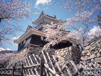 浜松城・写真