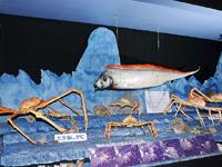 駿河湾深海生物館・写真