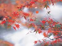 天城湯ヶ島の紅葉