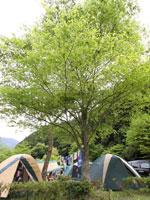 三ツ星オートキャンプ場・写真