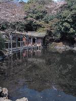 浅間大社 湧玉池