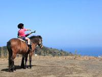 与那国馬ふれあい牧場・写真