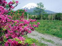 富士山遊歩道・写真