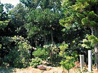 オヤケアカハチの碑