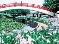 賀茂しょうぶ園・写真