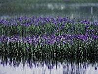 小堤西池・写真