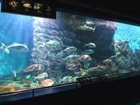 碧南海浜水族館・碧南市青少年海の科学館・写真