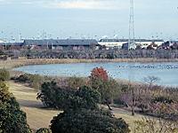 愛知県弥富野鳥園・写真