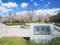 平和公園の桜・写真